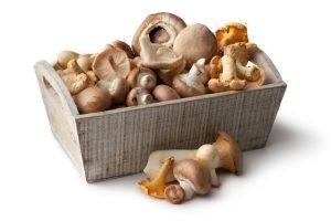 cosci di pollo ai funghi