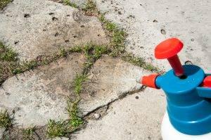 Stop alle formiche con i rimedi naturali