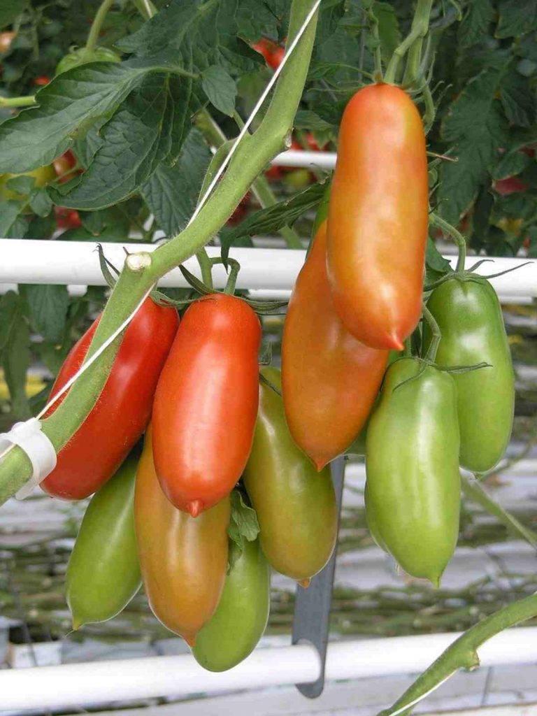 Pesto di Pomodori Arrostiti