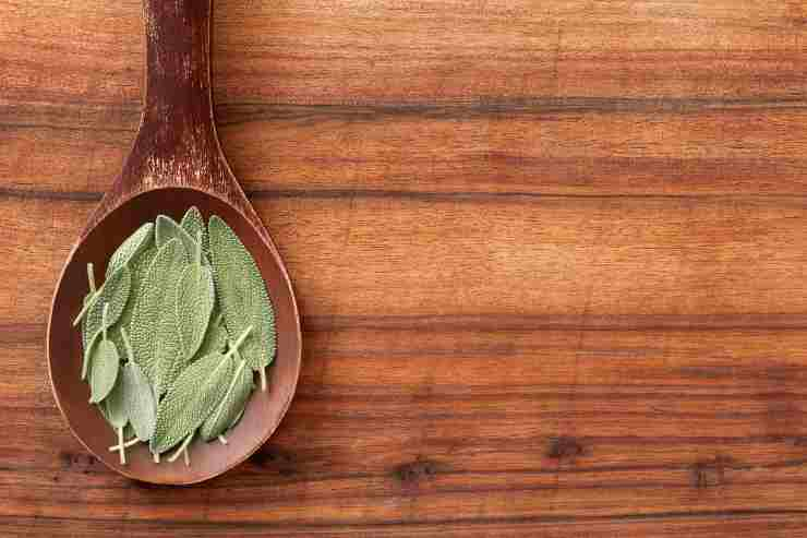 Tisana alla salvia rimedio naturale per sgonfiarsi e depurarsi - ricettasprint