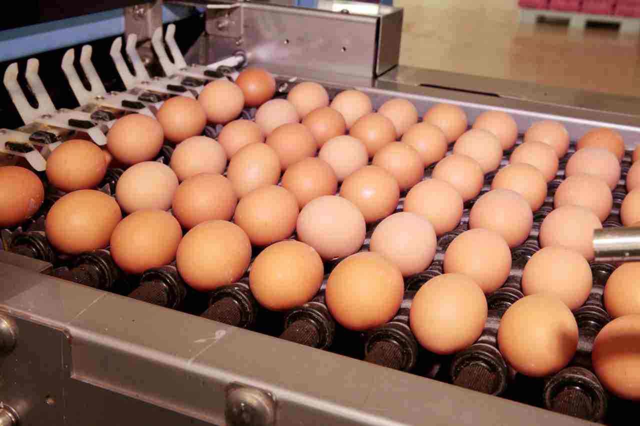 Salmonella uova allarme