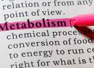 Metabolismo | sono cinque i cibi che lo accelerano | e aiutano a bruciare grassi