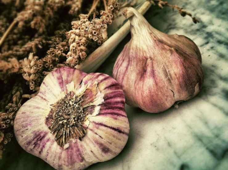 Pesto di radicchio trevigiano FOTO ricettasprint