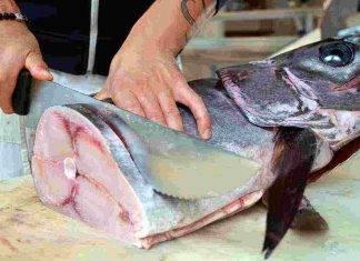 pesce mercurio