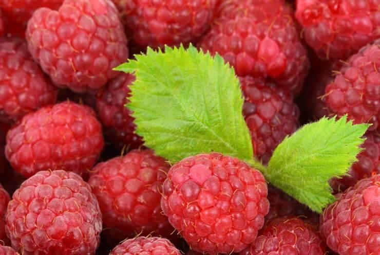 Ciambelle ai frutti rossi FOTO ricettasprint