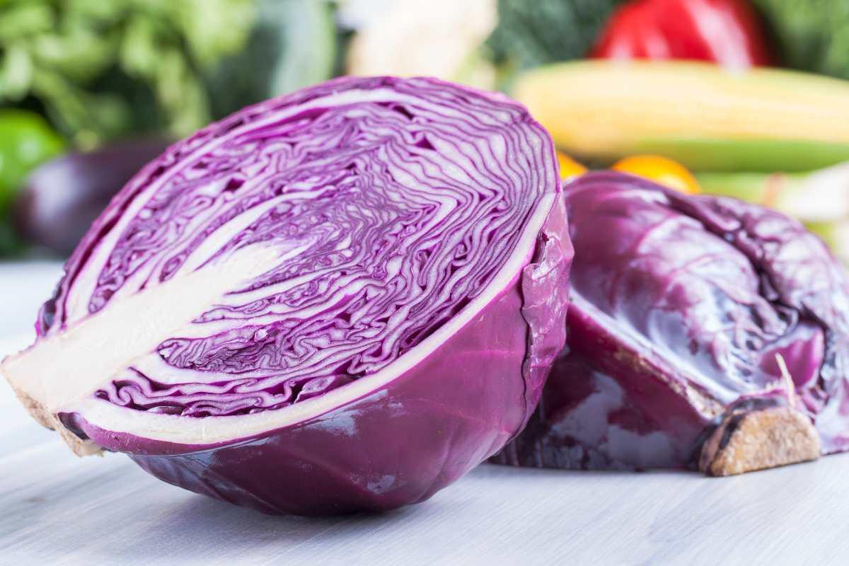 Torta salata con cavolo rosso e ricotta FOTO ricettasprint