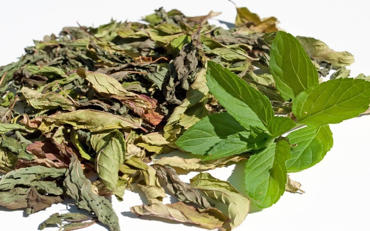 erba aromatica secca FOTO ricettasprint
