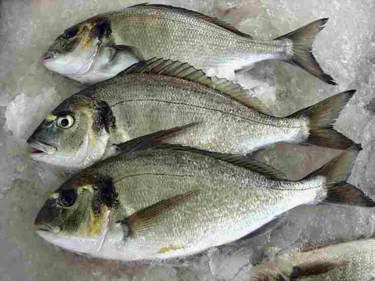 pesce alla griglia