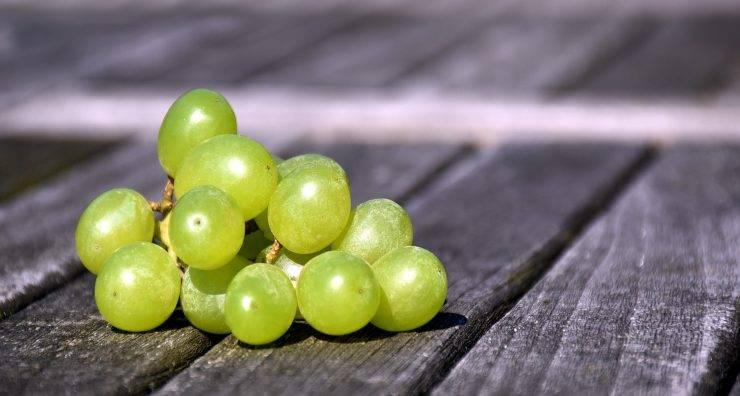 Torta all'uva bianca FOTO ricettasprint