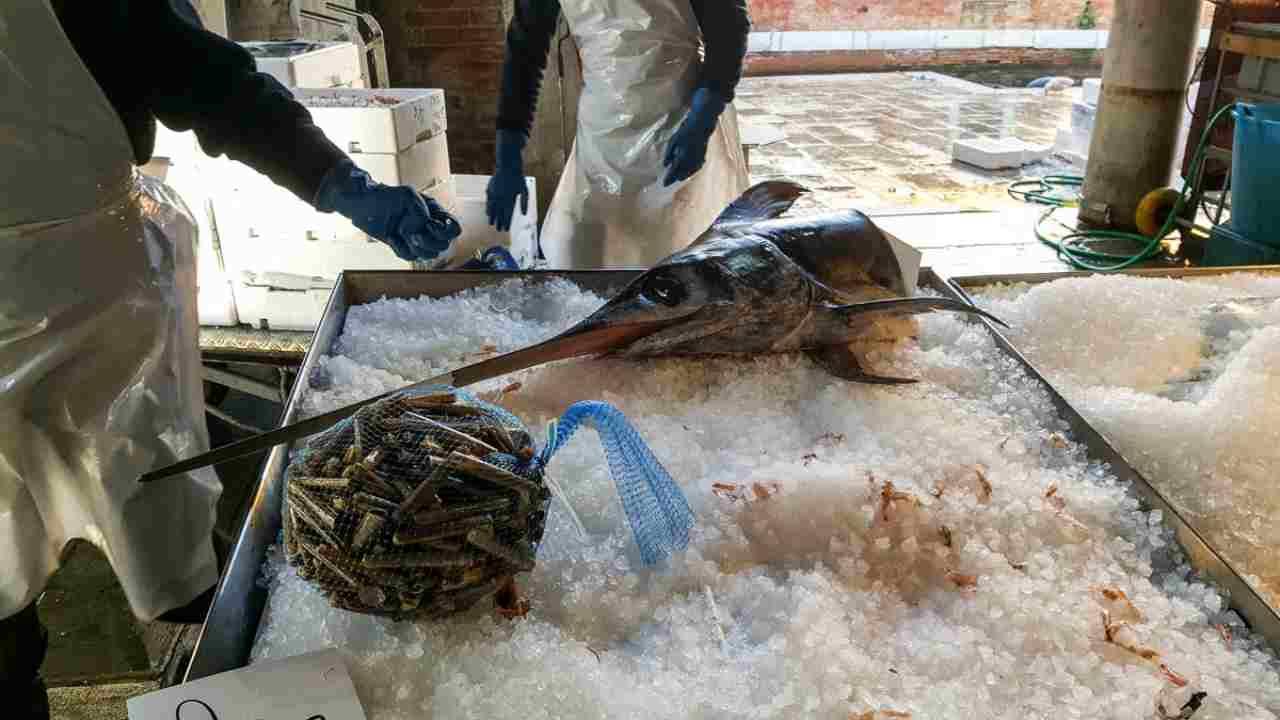 pesce contaminato aragosta