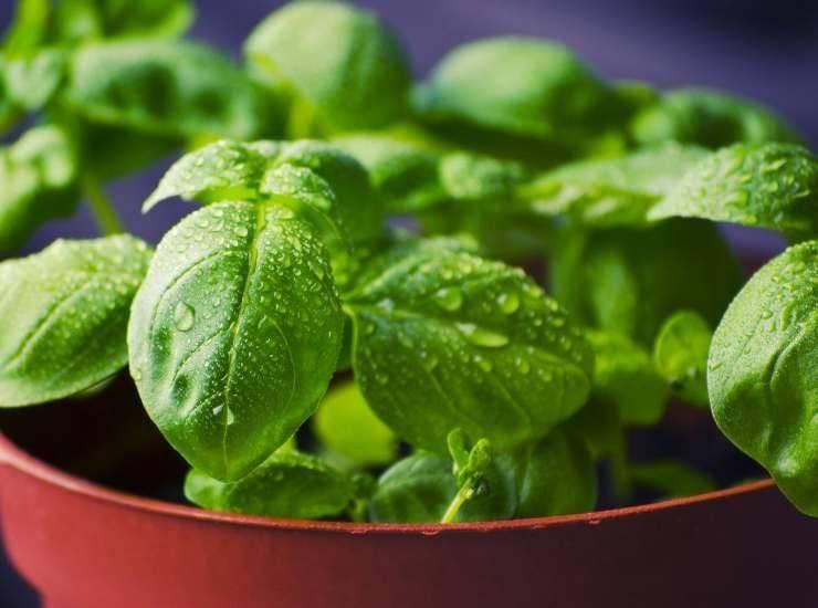 Polpette con salsa di basilico FOTO ricettasprint