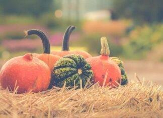 Zucca proprietà benefici e le migliori ricette Halloween ricettasprint