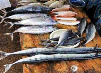 mercurio nel pesce richiamo