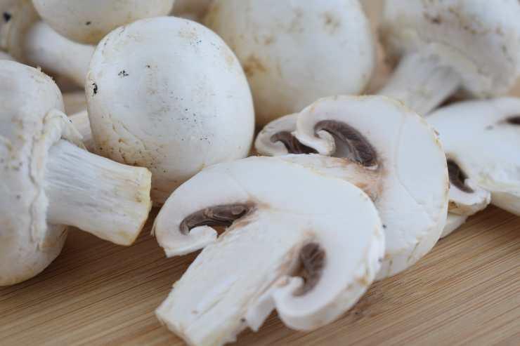 minestra funghi carne orzo ricettasprint