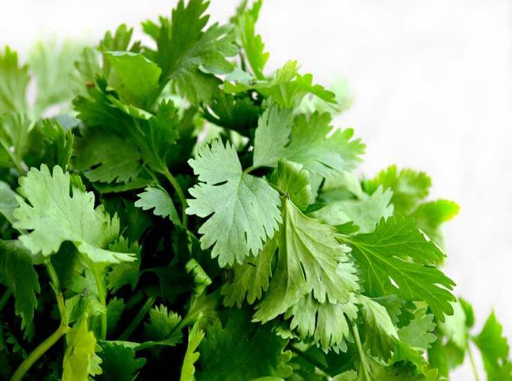 Fette di cavolfiore filanti con salsa verde FOTO ricettasprint