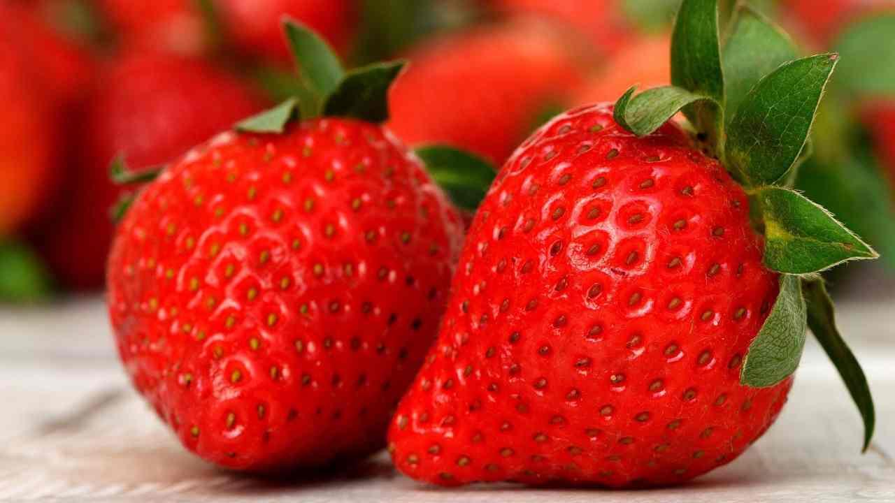Tipi di fragole Foto dal web