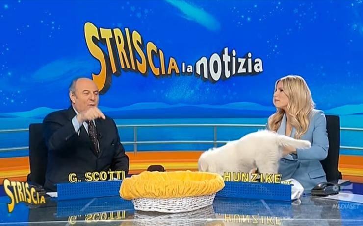 Simone Buzzi Striscia la Notizia - RicettaSprint