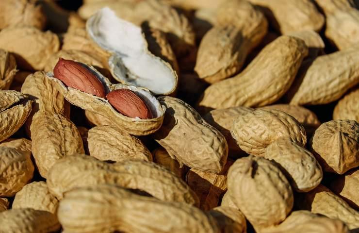 aflatossine in arachidi importate