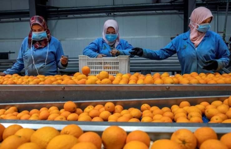 pesticidi arance contaminate