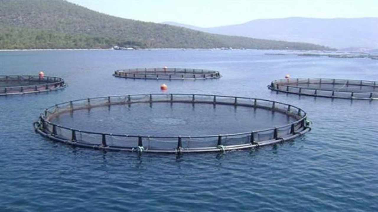 Pesce le gabbie utilizzate