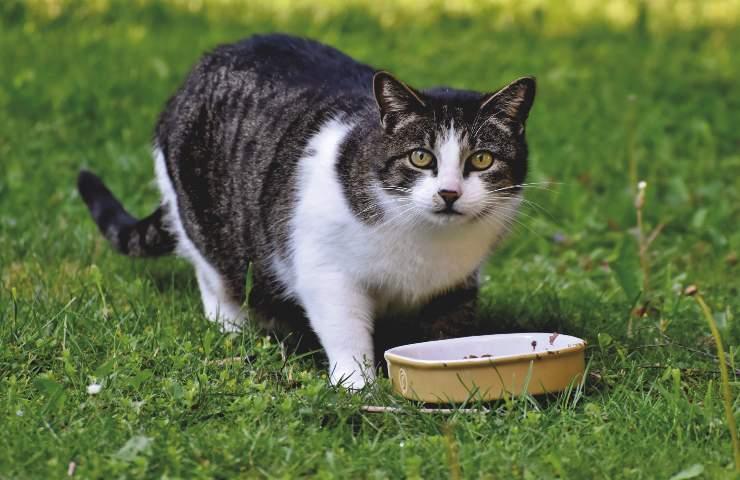 Cibo per gatti richiamo alimentare