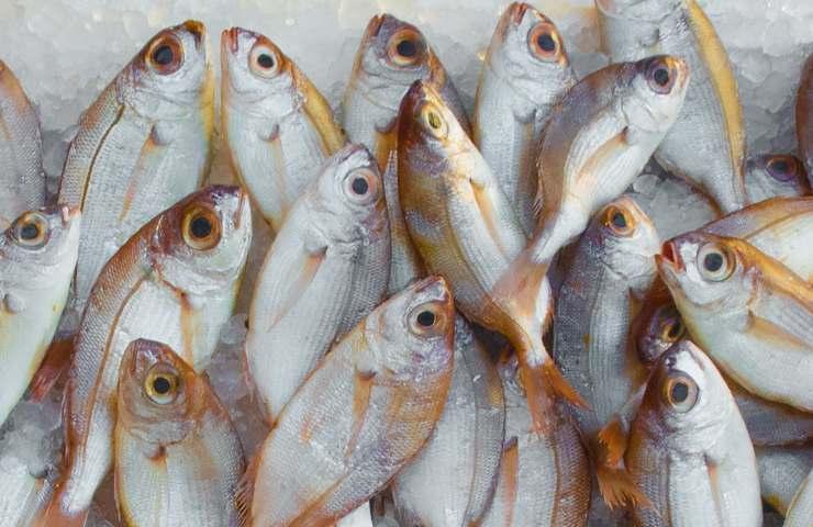 Come conservare il pesce fresco