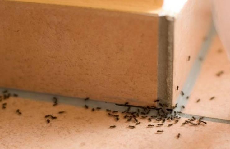 Formiche in casa come eliminarle