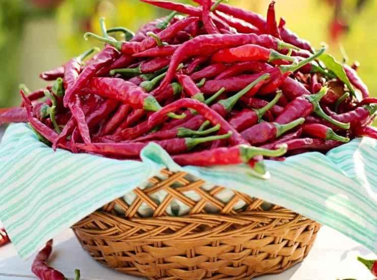 Lumache al pomodoro ricetta