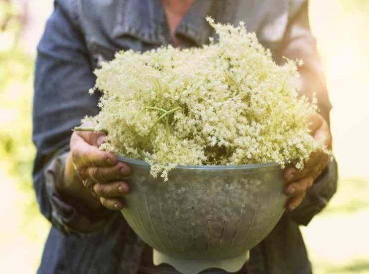 Torta ai fiori di Sambuco ricetta