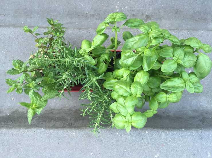 erbe aromatiche fresche