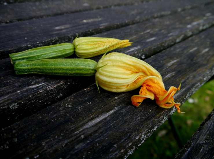 Cannoli di fiori di zucchine FOTO ricettasprint