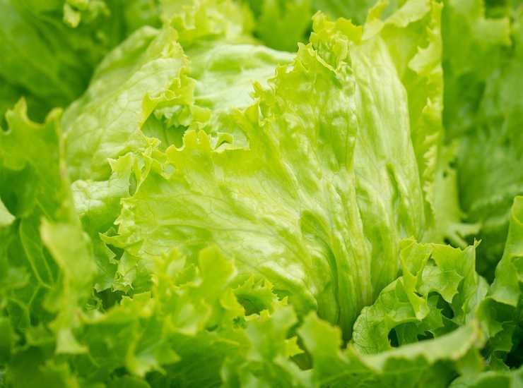 Cestini di piadina con insalata di Benedetta Rossi FOTO ricettasprint