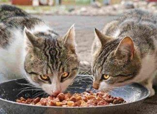 Pericoli dal cibo crudo per animali domestici